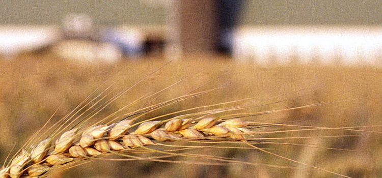 виды разрешенного использования земельных участков сельхозназначения